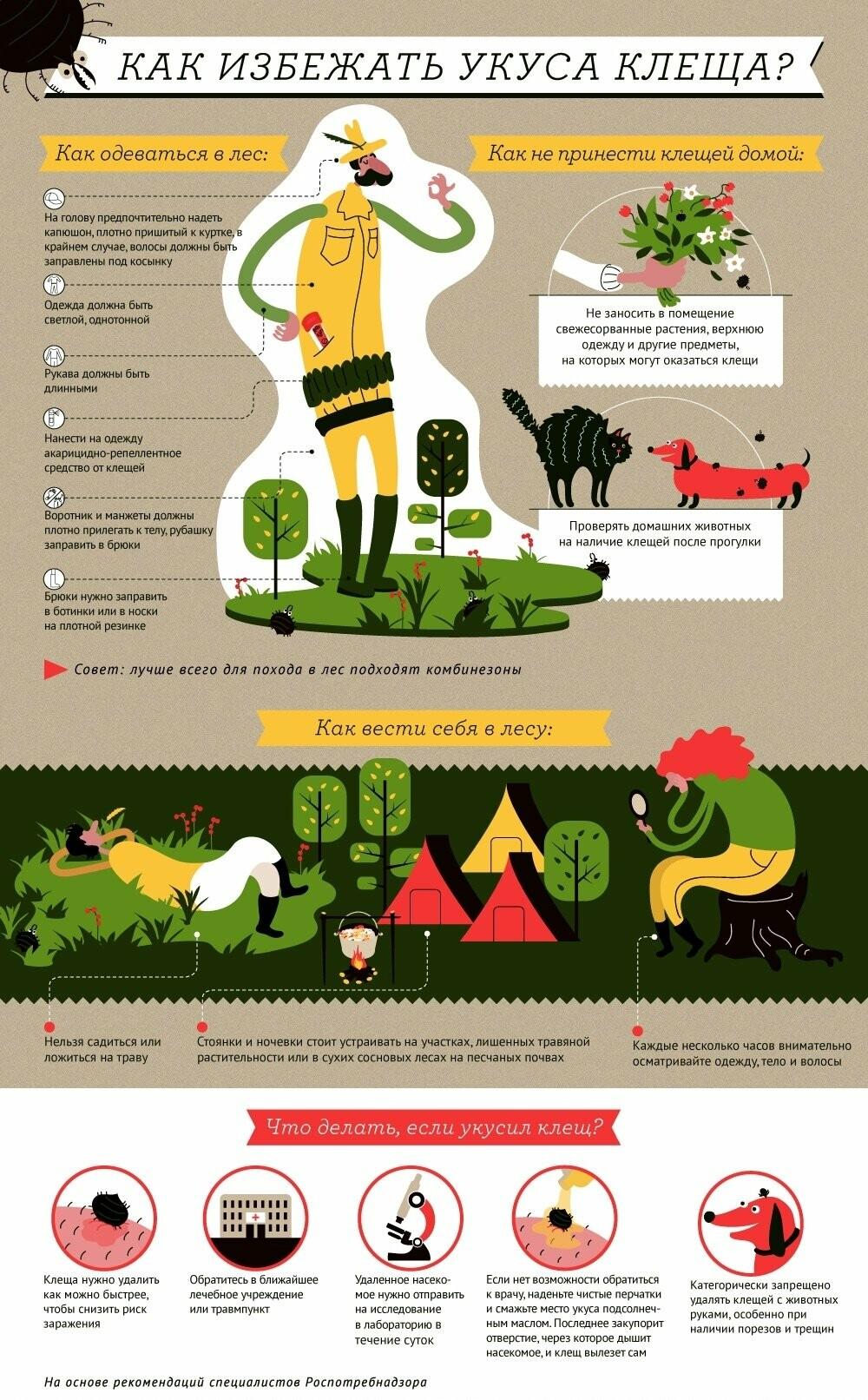 Инфографика - Юлия Осинцева «АиФ