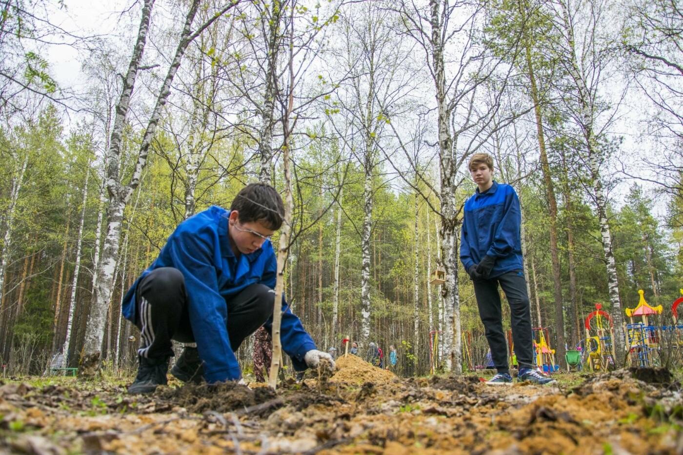 Озеленение территории Детского парка - Фото предоставлено пресс-службой АМОГО «Ухта»