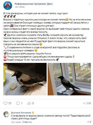 В Ухте вороне ищут дом, фото-1