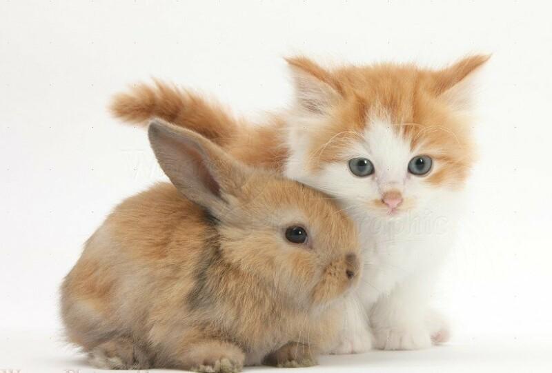 Открытка, картинки зайца и кота
